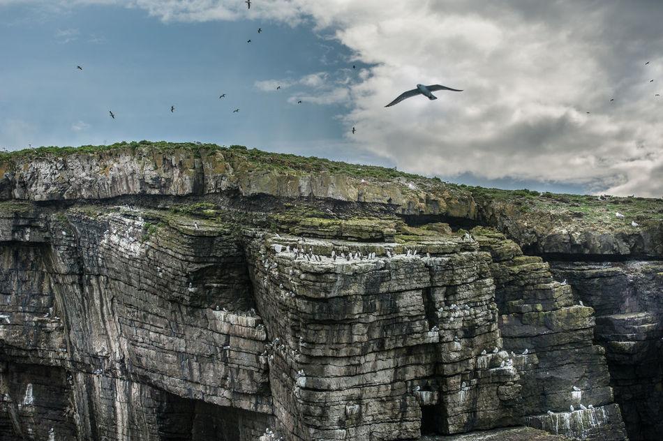 England Original Experiences Puffin Island Wales Fine Art Photography Adventure Club On The Way A Bird's Eye View Eyeemphoto