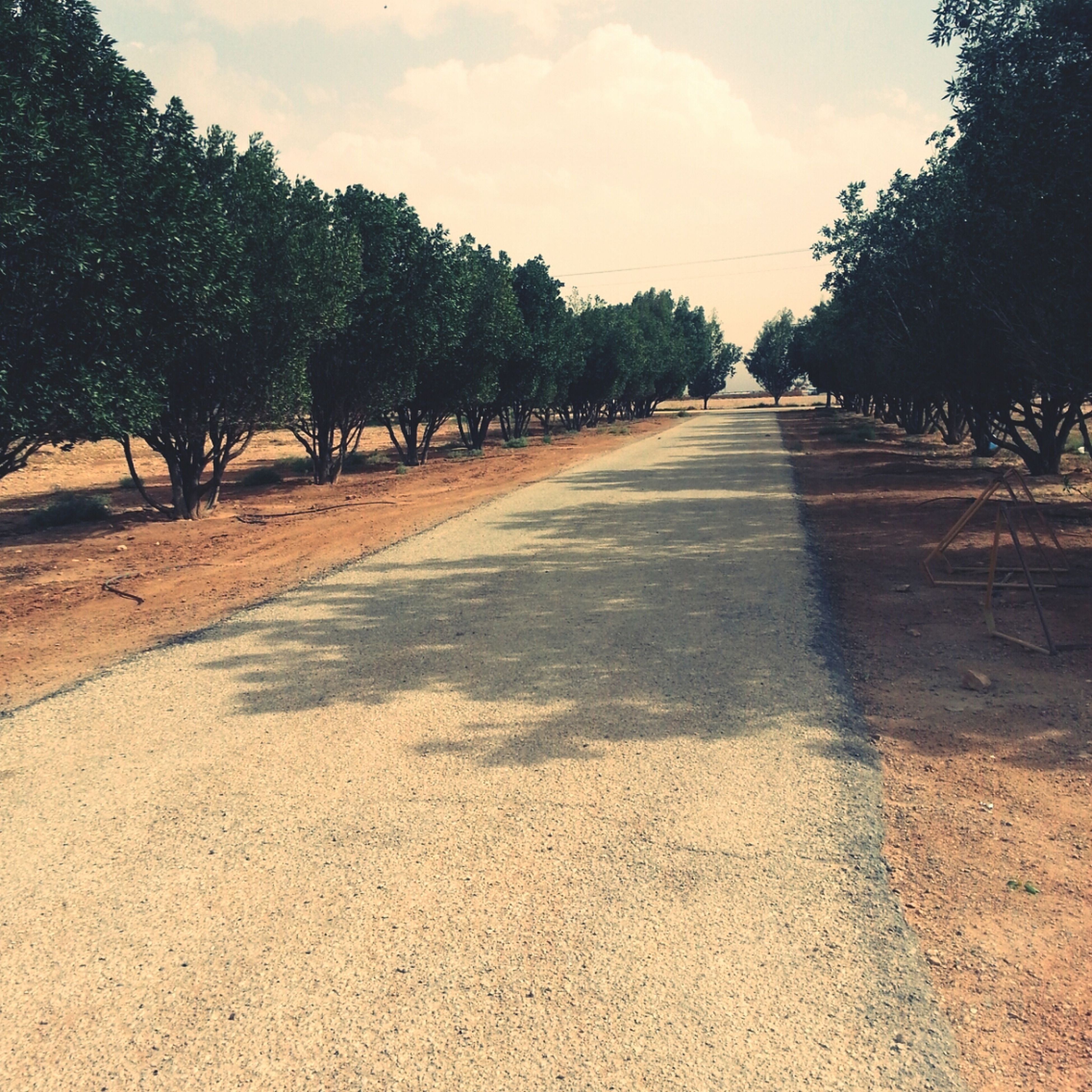 the way forward, tree, diminishing perspective, sky, road, vanishing point, transportation, tranquility, tranquil scene, surface level, dirt road, nature, empty road, sunlight, landscape, asphalt, cloud - sky, street, scenics, growth