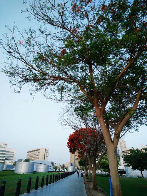 Nature Beauty In Nature Dubai Trees Green Green Green!  Unionstation Morning