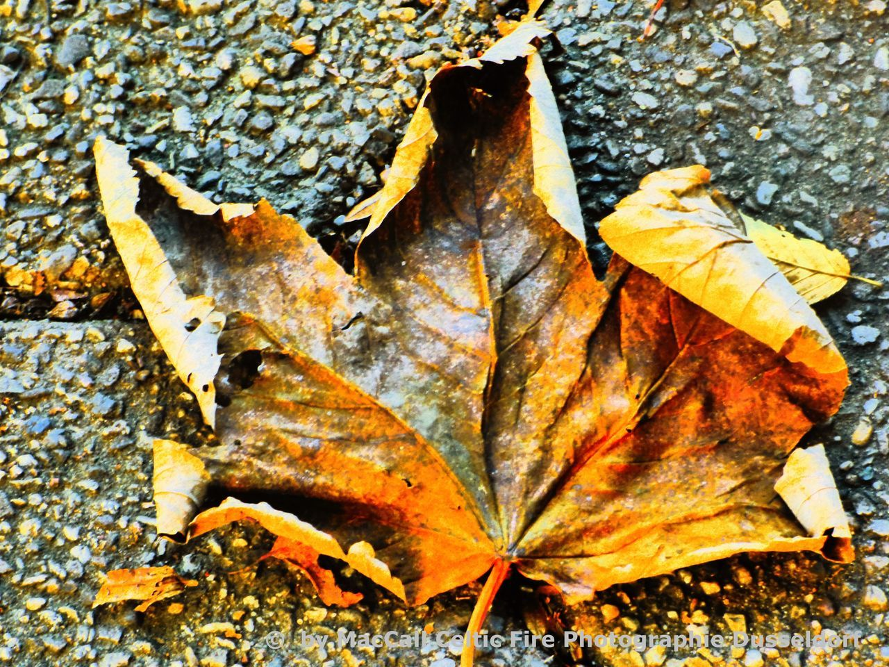 autumn, leaf, change, dry, leaves, fallen, nature, outdoors, day, maple, maple leaf, close-up, no people, fragility, beauty in nature