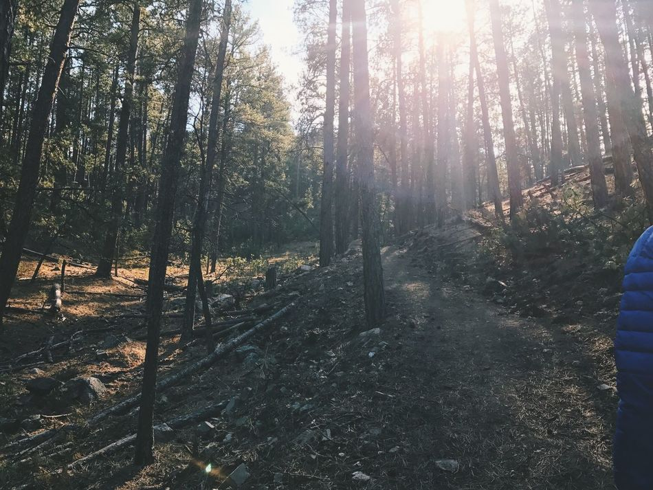Hiking Hiking Adventures Hiking Trail Tree Nature Forest Sunlight Outdoors WoodLand Scenics Tranquil Scene Day Beauty In Nature Sun Sunbeam Landscape Woods