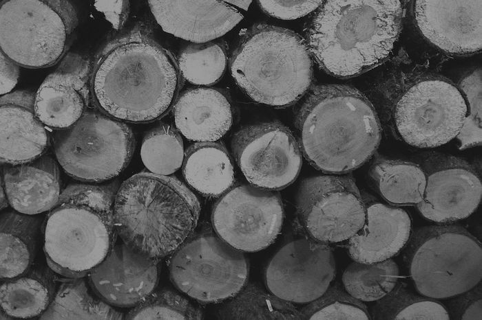 Ready to tame the cold Winter Christmas Cold Happy Chill Relax Zen Woodstacks Stack Wood Forest Christmas Tree Tree Nature Blackandwhite Eyemphotography EyeEm Best Shots EyeEmNewHere EyeEm Nature Lover Wood - Material Pattern Day Deforestation Repetition Backgrounds Full Frame Large Group Of Objects No People Industry