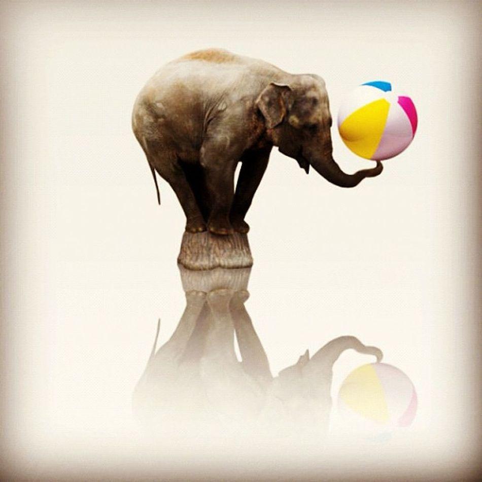 Who says elephants can't dance JumboBallet IBM