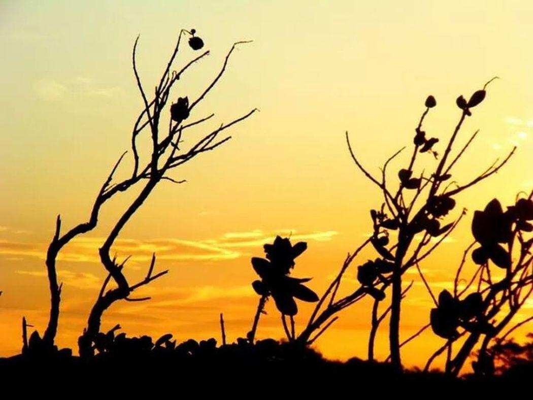 Beautifull Sunset Gold Day Shadows Taking Photos