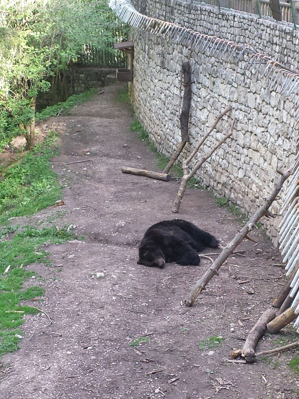 animal themes, one animal, domestic animals, mammal, outdoors, pets, day, no people, domestic cat, grass, nature