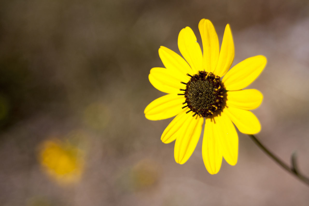 flower, yellow, fragility, petal, flower head, beauty in nature, nature, freshness, pollen, close-up, no people, plant, day, outdoors