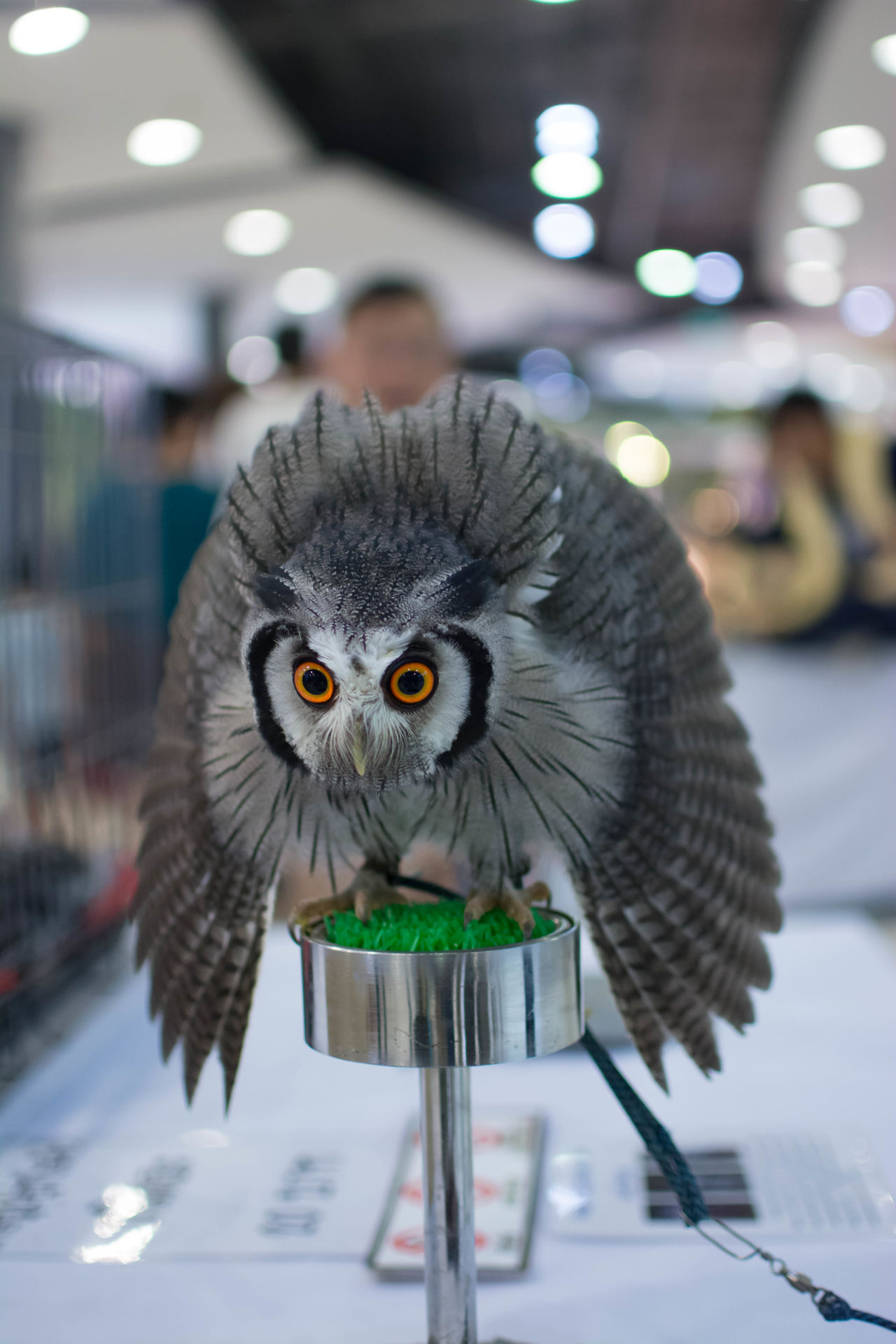owl Animal Themes Bird Close-up Cute Cute Pets Day Focus On Foreground Indoors  No People One Animal Owl Owl Eyes Yellow Eyes