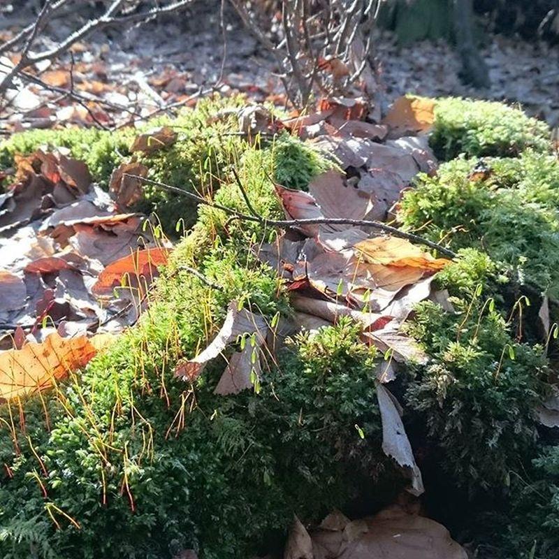 Fsj im Wald 😍 Fsj Forrest Light Green Kita Imp Nofilter