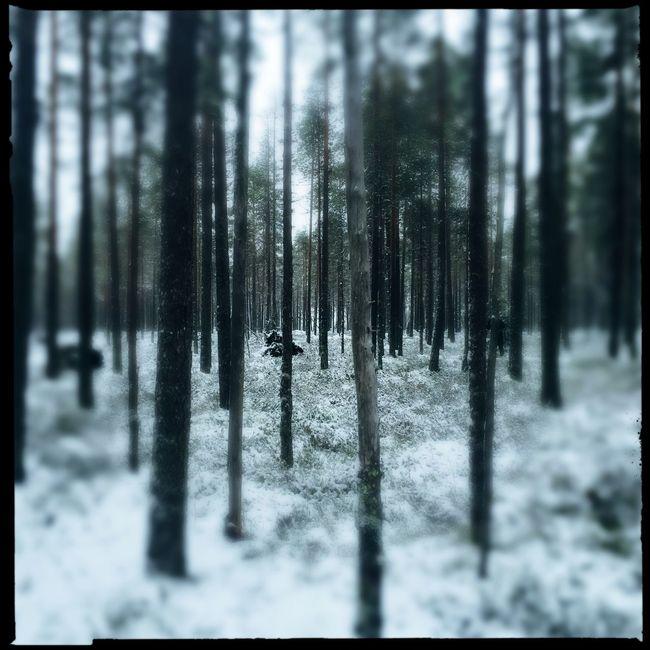 January 1 2016 💙❄️💙 Taking Photos Tadaa Community EyeEm Nature Lover Trees TreePorn