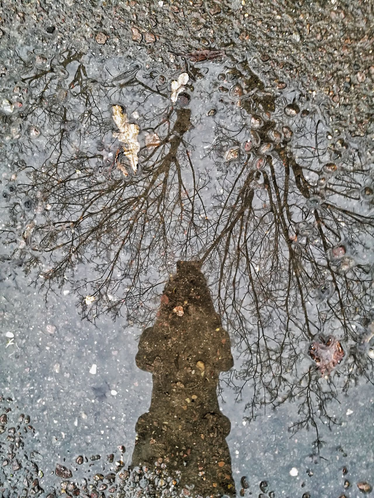 Reflection Tree Nature Day One Person Outdoors Puddle Close-up Sky People Real People Pebbles Water Trees Branches Leaves Cold Clear