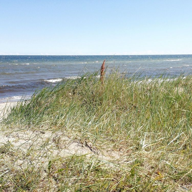 A Little Windy At The Beach Landscape_Collection