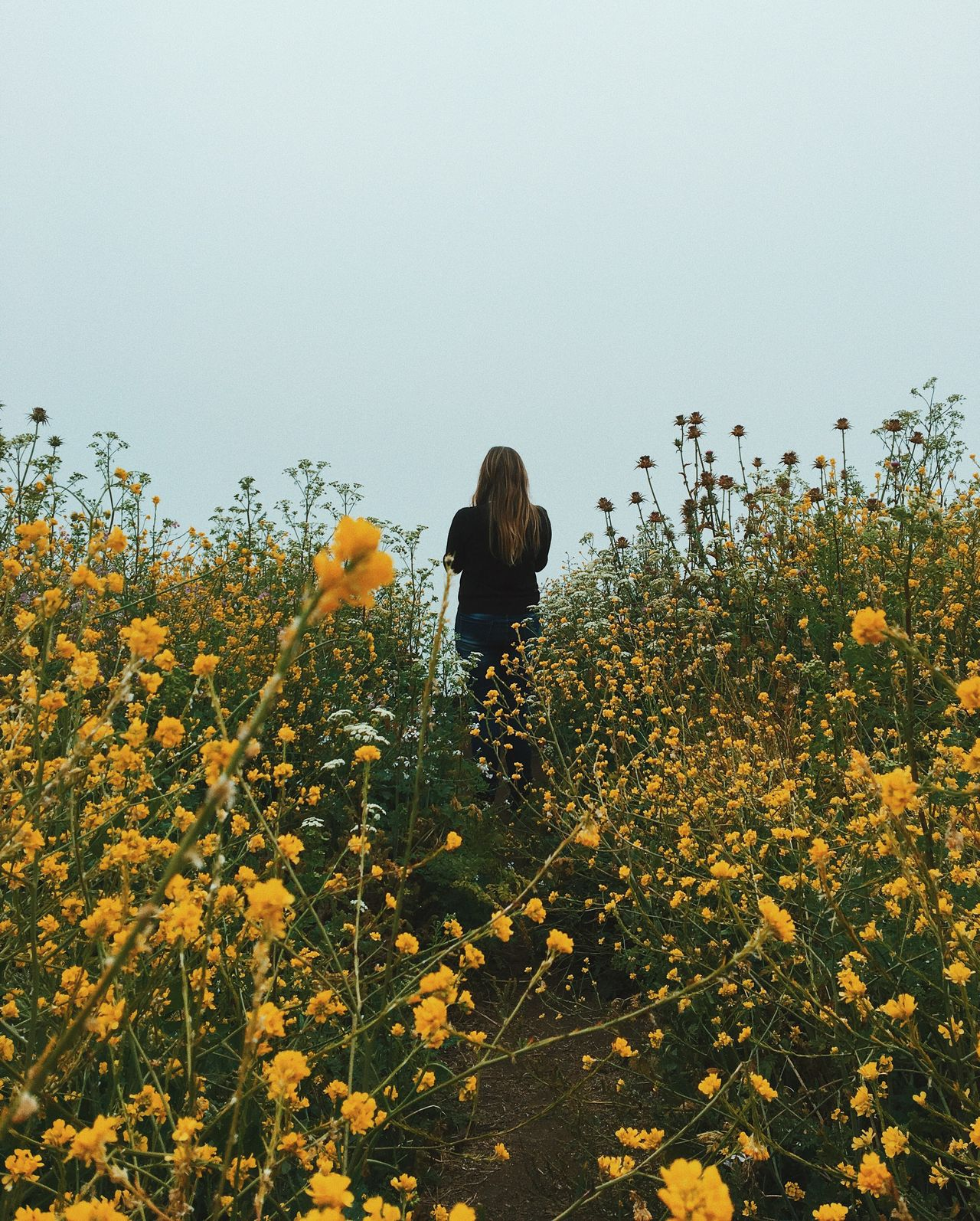 Secret Spaces Flower Growth Beauty In Nature Nature Rear View Field Lifestyles Clear Sky Outdoors Freshness Yellow Leisure Activity Plant Real People Blooming Fragility Sunflower Day Tree Scenics Long Goodbye TCPM