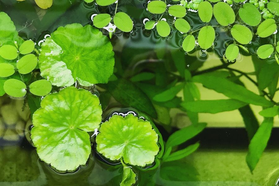 Leaf Plant Green Color Nature One Animal Day Animal Themes Growth Outdoors Insect Animals In The Wild Water High Angle View Close-up No People Animal Wildlife Beauty In Nature Fragility Freshness