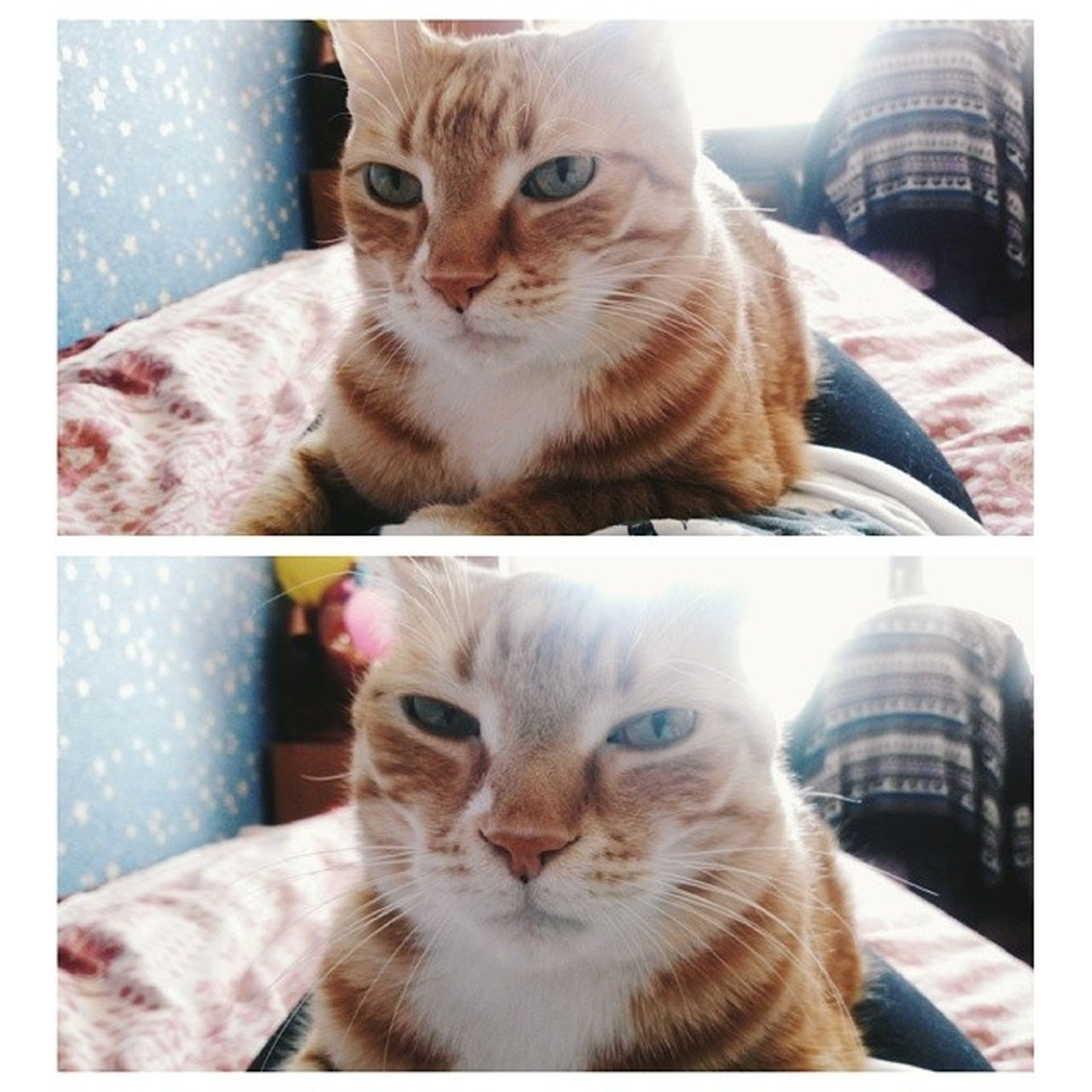 Mrrr? Cat Animals Vcsopop Vscocam vscogood vscoshout vscorussia vsco LOL love любимка котэ