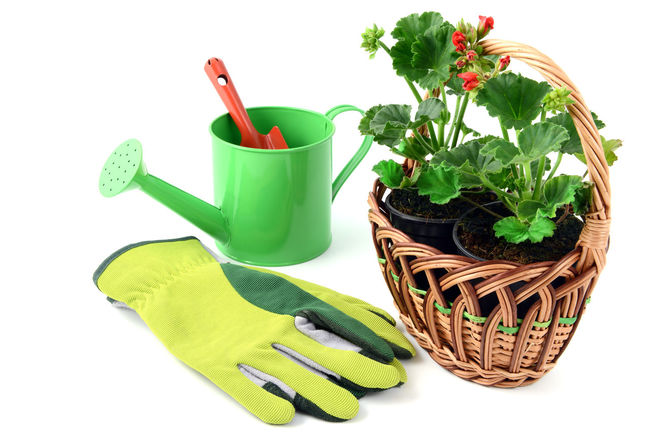 Geranium flowerpot in a basket with gardening tools like gloves, shovel, water can. isolated background Giesskanne Watercan Red Flowers Isolated Isolated White Background Red Flower Gardening Tools Gloves Geranium Geranien Red Red Flower At Its Best Shovel Basket