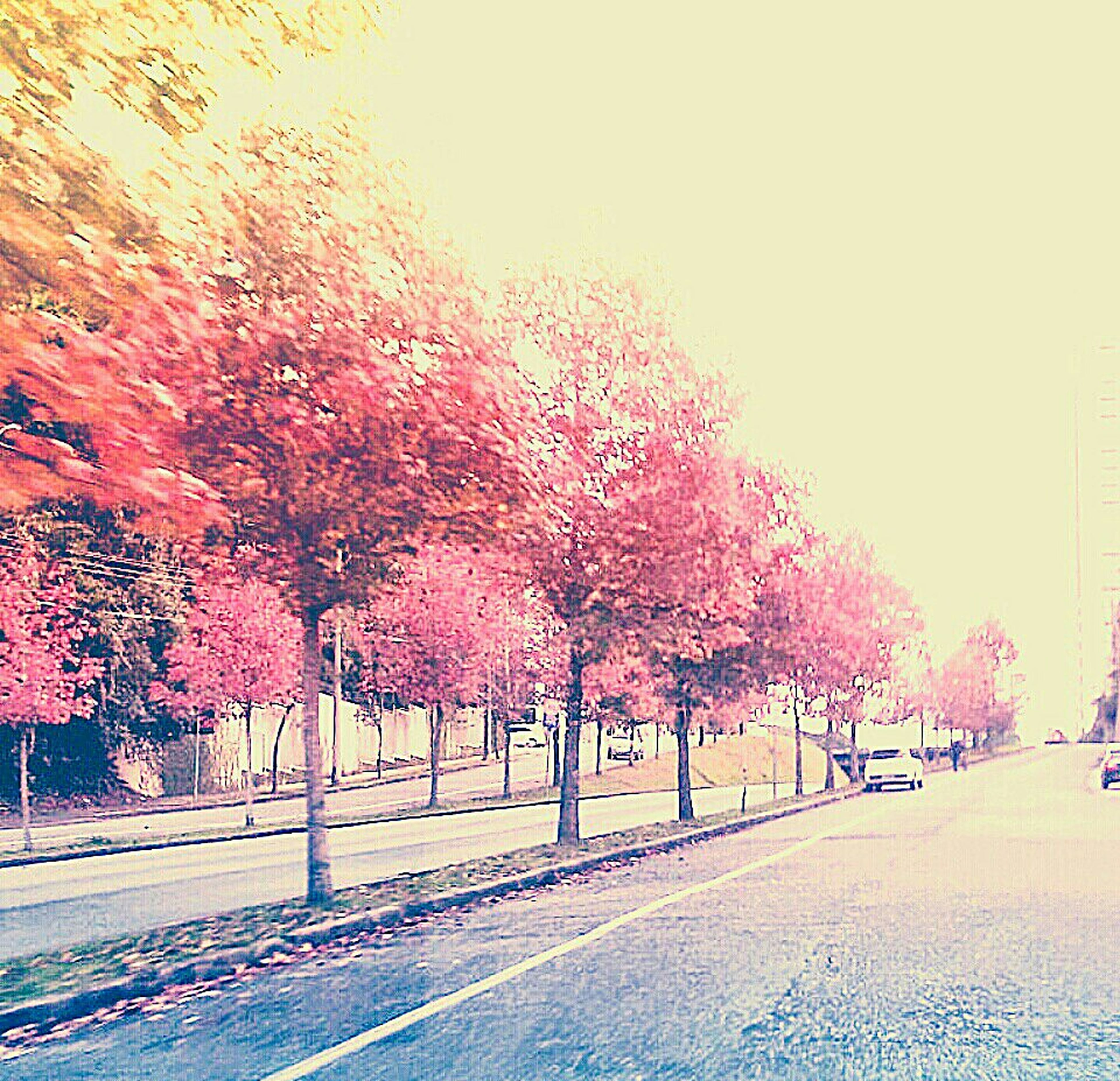 tree, road, autumn, clear sky, street, transportation, season, growth, branch, nature, change, day, red, footpath, sidewalk, the way forward, outdoors, sky, no people, wall - building feature