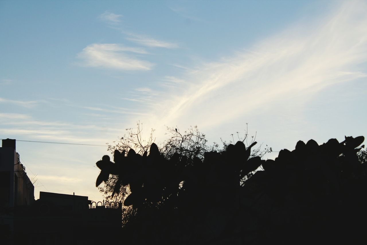 silhouette, sky, tree, nature, low angle view, outdoors, sunset, no people, tranquility, beauty in nature, cloud - sky, scenics, day