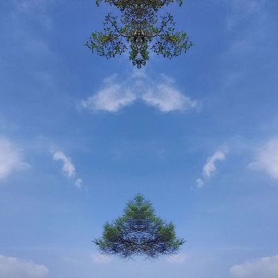 My my The SuperFlying Tree and an Awesome Eagle Sitting on this tree and watching!!! :) Instamirror Instacapture Bloggius Hucciofficial amazing abstract hosteltime coffeeyouneed instatrees tree trees instatree eagle eagles instaeagle mirror