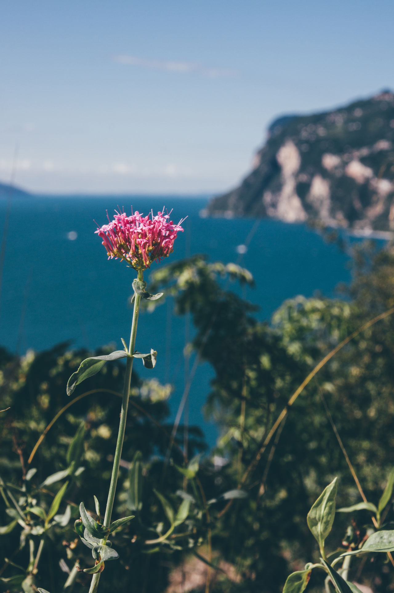 Beauty In Nature Blooming Blossom Blossoms  Close-up Day Flower Flower Head Focus On Foreground Fragility Freshness Growth Mediterranean  Mediterranean Sea Mountain Nature No People Outdoors Plant Sky Travel Zinnia