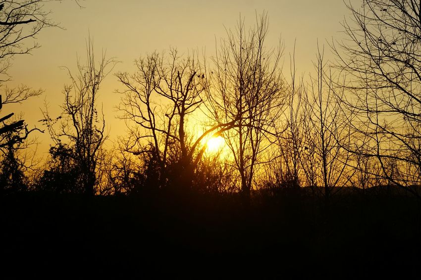 Sunset Sun Silhouette Nature Orange Color Tranquil Scene No People Sky Sunlight Tranquility Beauty In Nature Scenics Dramatic Sky Tree Outdoors Backgrounds Close-up Dramatic Sky Sunlight Beauty In Nature Yellow