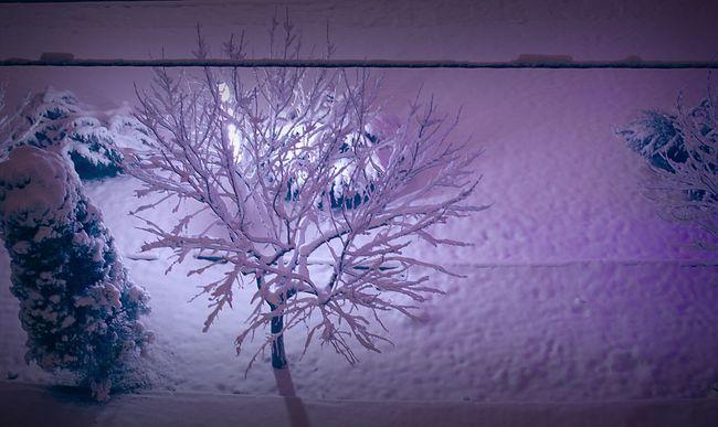 snow Snow ❄ Snow Time Photography