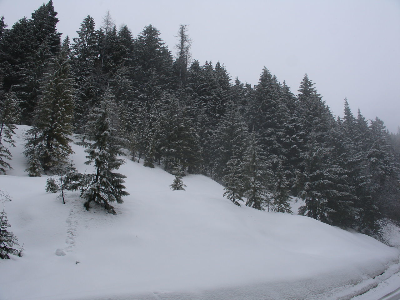 winter, snow, tree, cold temperature, nature, tranquility, beauty in nature, tranquil scene, no people, outdoors, forest, scenics, landscape, day, sky