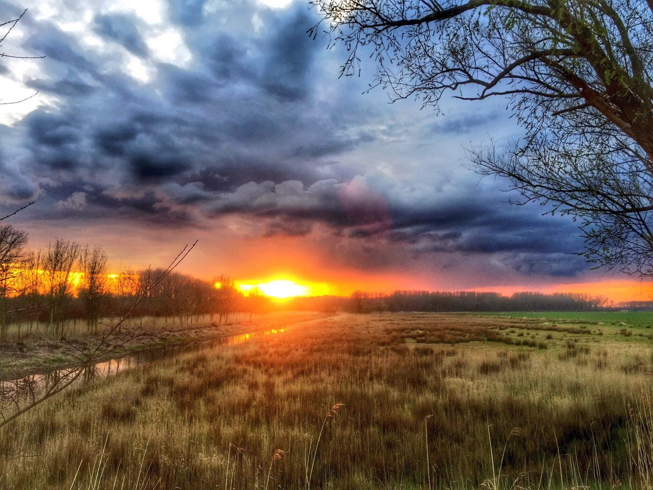 sunset, field, sky, grass, nature, tranquil scene, orange color, beauty in nature, scenics, tranquility, cloud - sky, landscape, sun, growth, no people, outdoors, tree, plant, rural scene, day