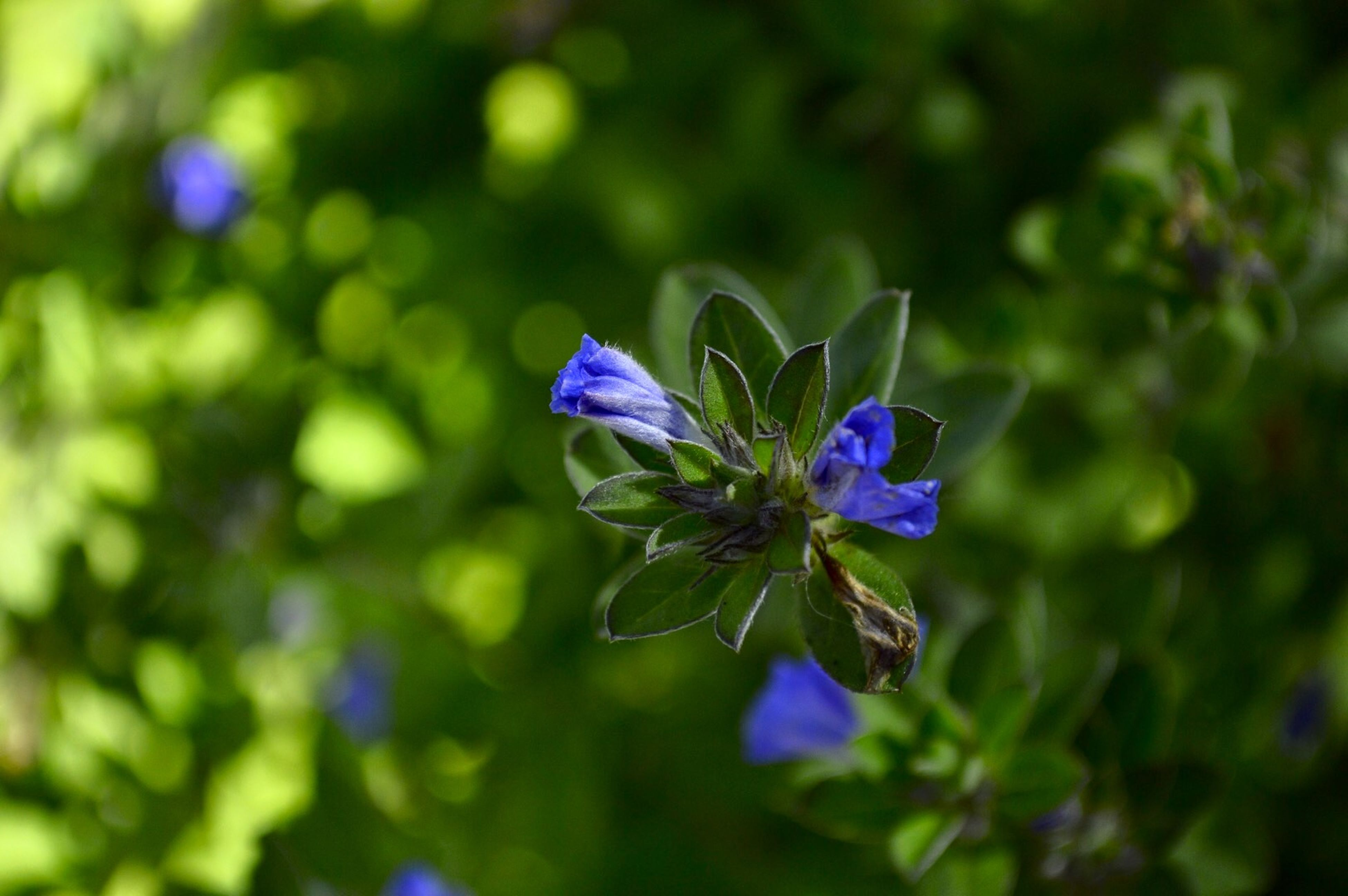 flower, purple, freshness, fragility, petal, growth, focus on foreground, beauty in nature, flower head, blue, close-up, blooming, nature, plant, selective focus, stem, in bloom, outdoors, blossom, day