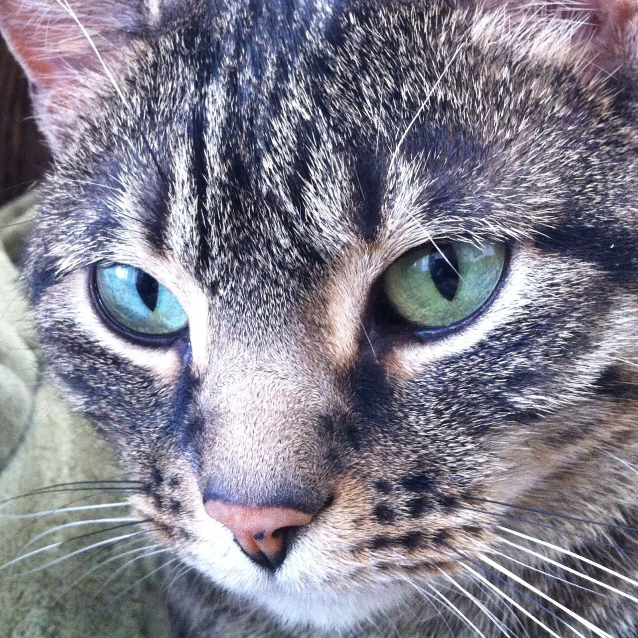 Domestic Cat Pets Animal Themes Looking At Camera Feline Portrait Close-up Mammal One Animal Domestic Animals Green Green Eyes Fur Tabby Tabby Cat Relaxing Hair Whisker Animal Head  Animal Eye No People Indoors  Day