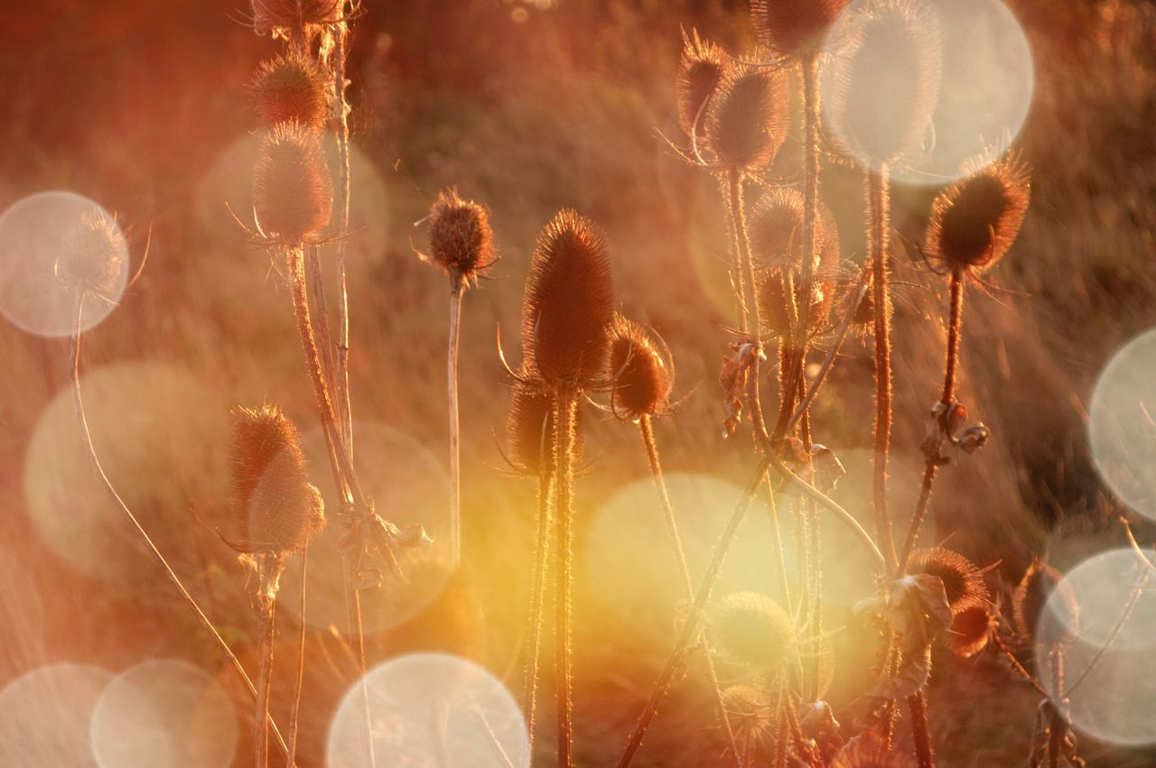 Nature Beauty In Nature Sun Glare Growth Plant Growth