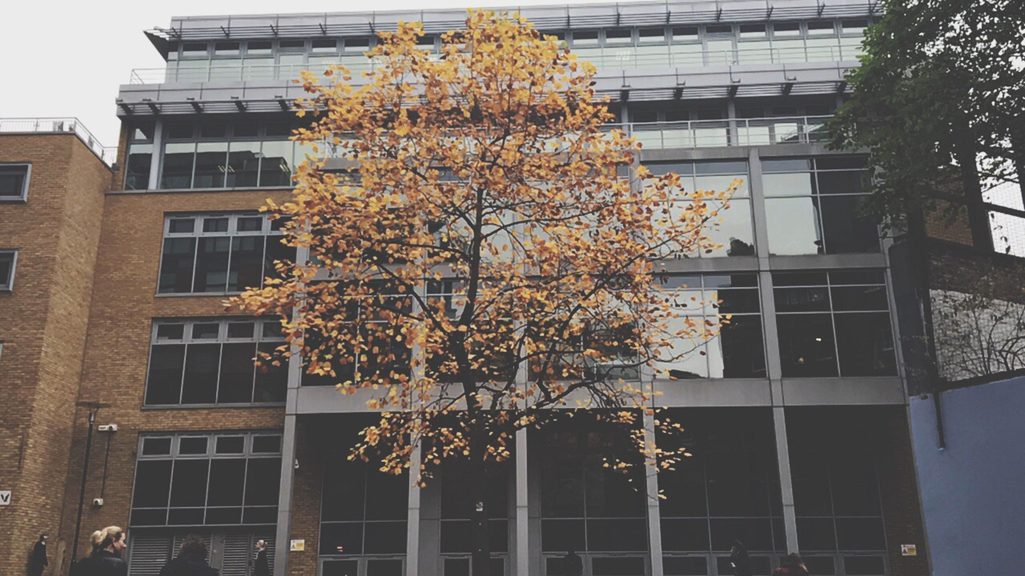 building exterior, architecture, built structure, tree, growth, flower, low angle view, no people, city, outdoors, day, nature, branch, fragility