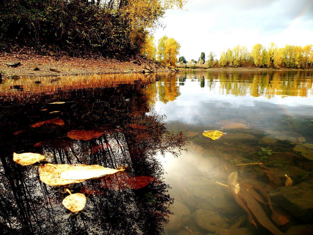 Oregon City Clackamette Park Reflected Glory Reflection_collection Autumn🍁🍁🍁 Taking Photos