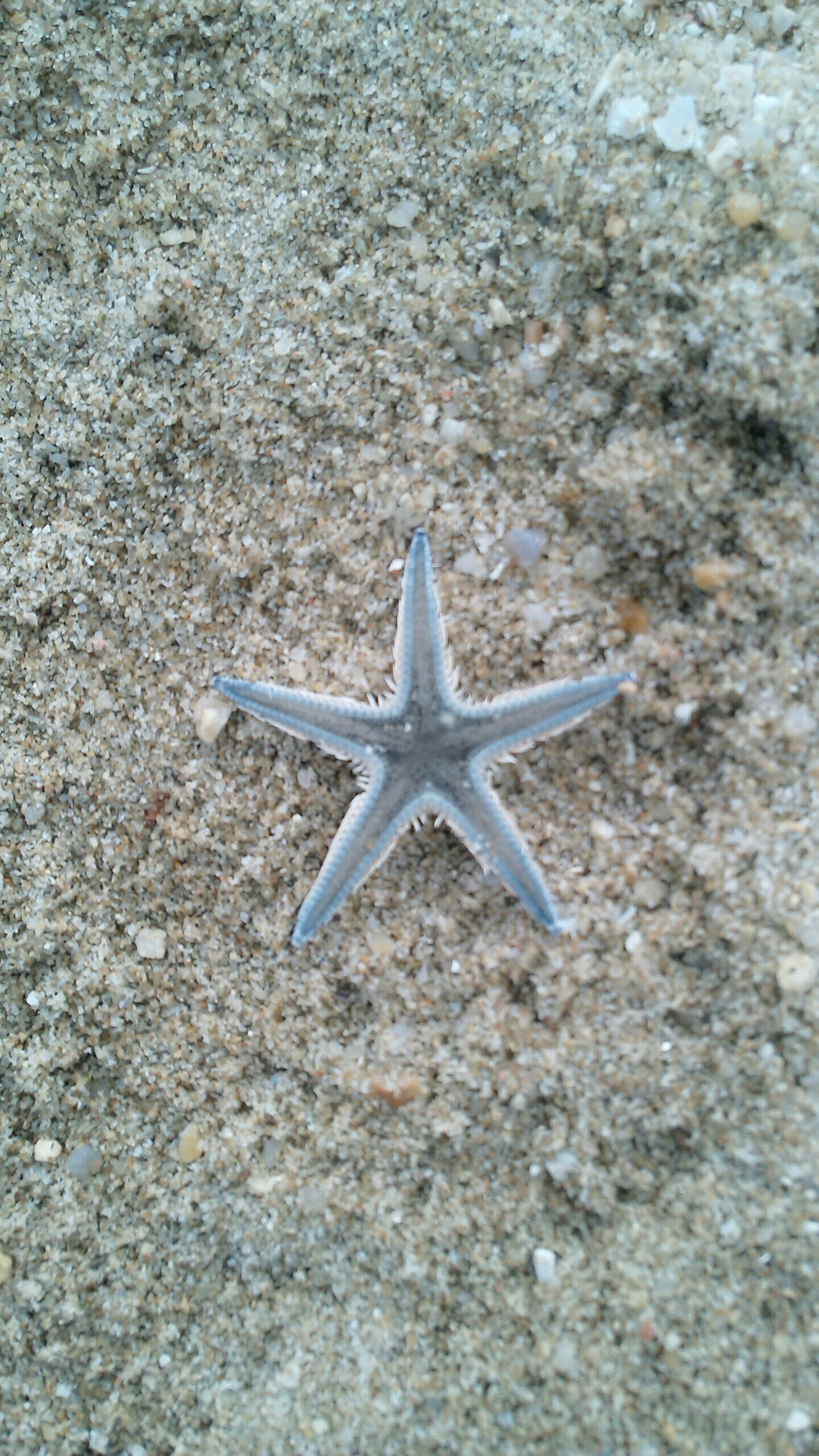 close-up, day, nature, no people, star shape, high angle view, outdoors, single object, textured, blue, shape, sunlight, white color, flying, pattern, still life, tranquility, art and craft, transportation, asphalt