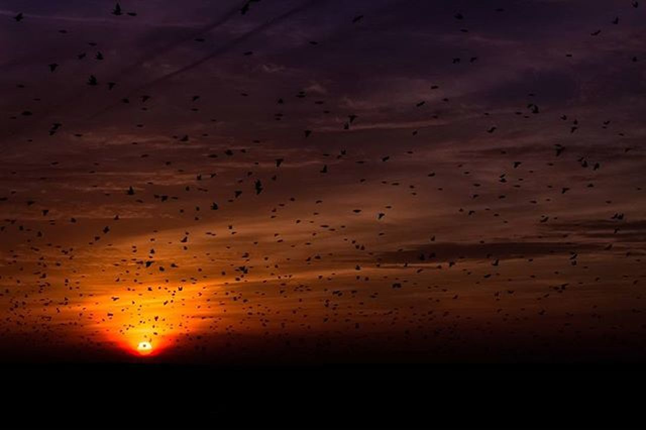 - - T h e h o u r o f t h e s t a r l i n g s - ➖ - S u n s e t - ➖ Starlings Swarm Provence Aixenprovence Aix France Gopro Hero4 Sun Amazing Beautiful Birds Goprovip Goprodreams Awesome Colorful Colors Sky Summer Nature Erasmus Life Sunset Sundown Packbackin @iloveaix @aixenprovencetourism :)
