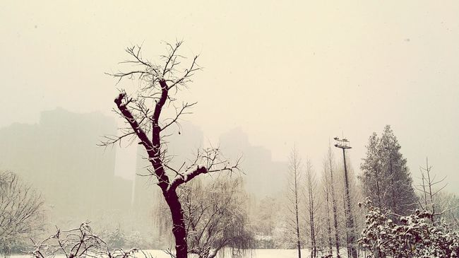 Wuhan, the very first real snow of the year 2016. First Eyeem Photo Snow Tree White
