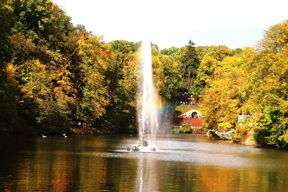 lake fountain sky trees autumn fall Golden trees swans air freshness rest park dendropark Water Splashing Travel Destinations Spraying Tourism Nature Scenics Outdoors Day Sprinkling Beauty In Nature Branches And Leaves Orange Color Photos Photographer Multi Colored Landscape Cityparking Red Maple Leaf Leaves🌿 Branch Animals In The Wild Animal Themes Backgrounds