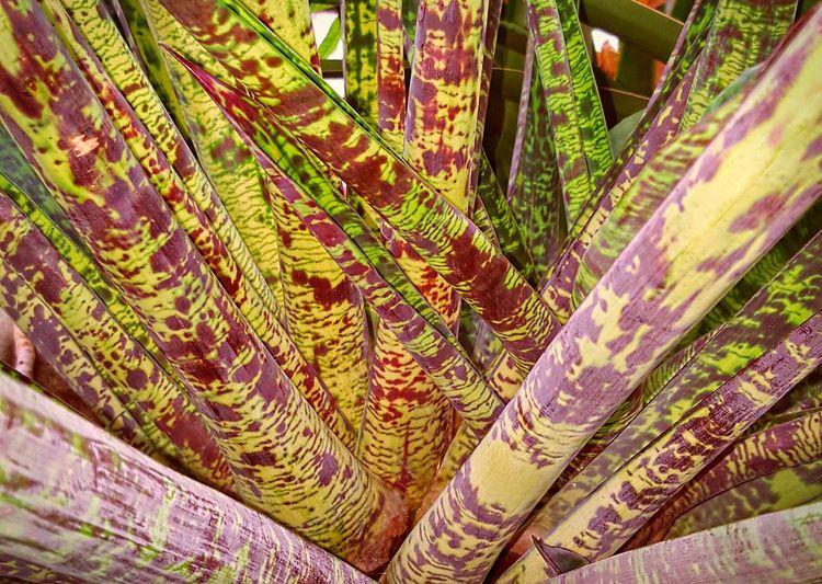 Flowers,Plants & Garden Plants Plants And Flowers Plants 🌱 Eyeem Plants