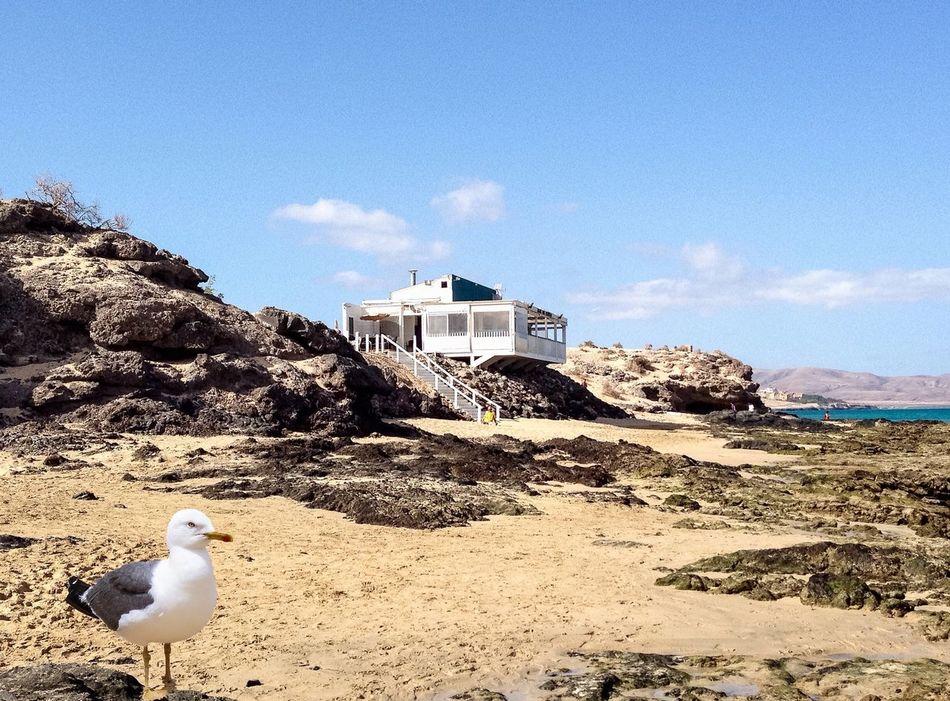 Beauty In Nature Beach Seagull Gull Sand & Sea Stone Sand Möwe Beach Photography