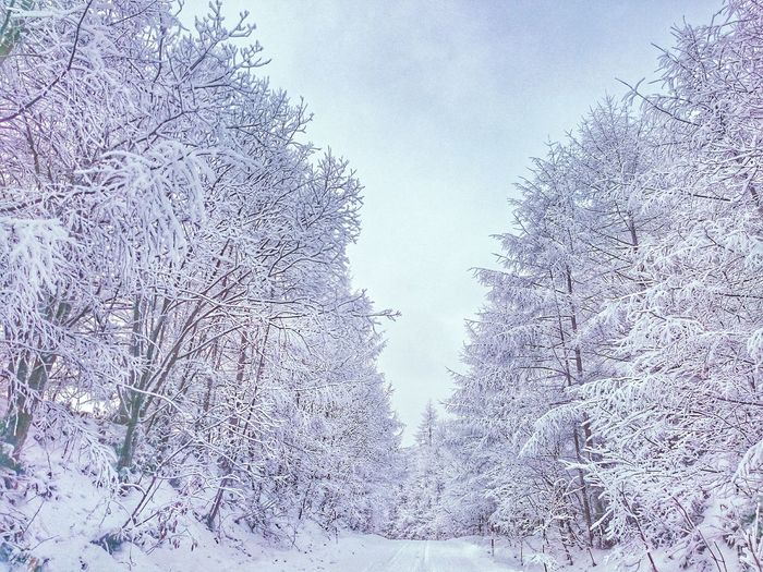 Marvelous very cold morning⛄ Cold Temperature Nature No People Tree Day Winter Outdoors Snowscape Snowwhite 自然 Road 道 Japan SnowSnowlandscapes Very Cold Morning 林 Sky Trees And Sky 北海道 木 Trees And Nature Beauty In Nature Cold Outside ❄⛄  冬