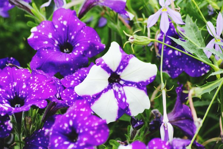 Fleurs Flowers Nature