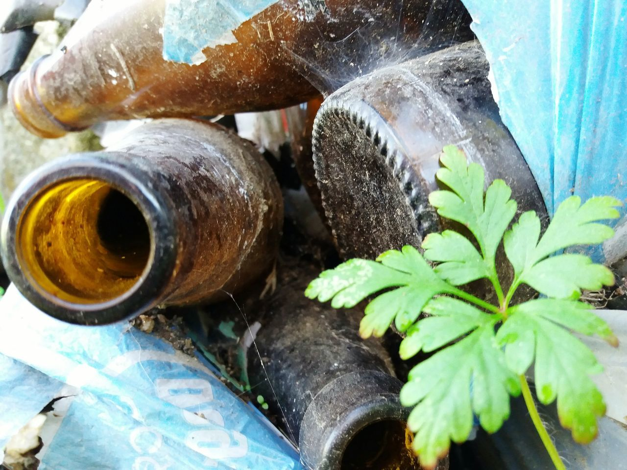survival plant Environmental Issues Enviroment Environmental Damage Bottles Collection Garbage Plant Plant Life Leaf Close-up No People Outdoors Glass Bottle Green Leaf