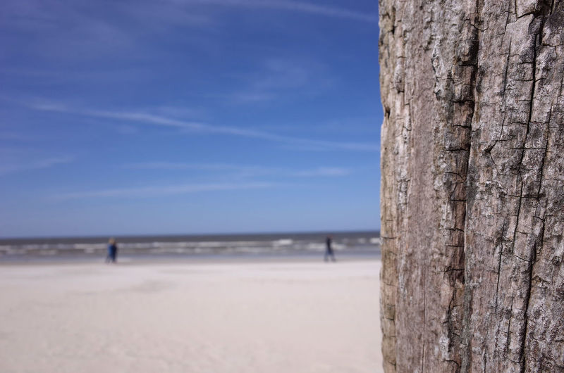 Close up of weathered tree trunk. Out of focus beach and people in the background. Copy space. Background Beach Beauty In Nature Blue Close-up Copy Space Day Germany Horizon Over Water Nature Norderney Norderney Ist Mein Hawaii Out Of Focus Outdoors Scenics Sea Sky Tree Tree Trunk Wallpaper Water