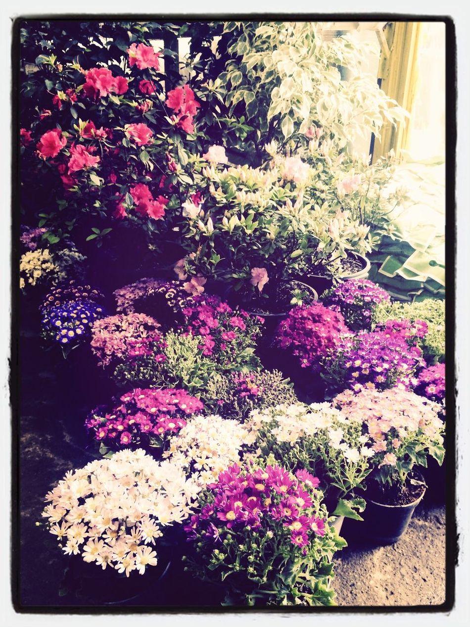 Flowers Nowruz Lovely