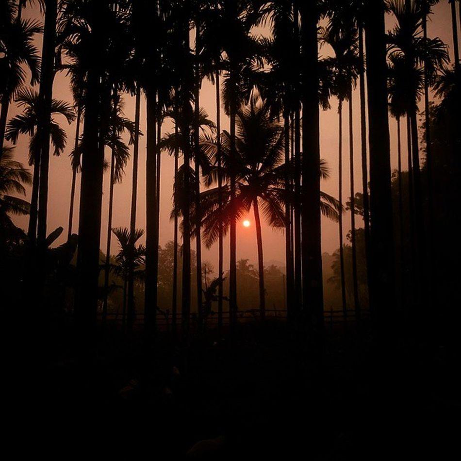 Sunrise Mynative Viewfromdoor Sonyxperiaz2