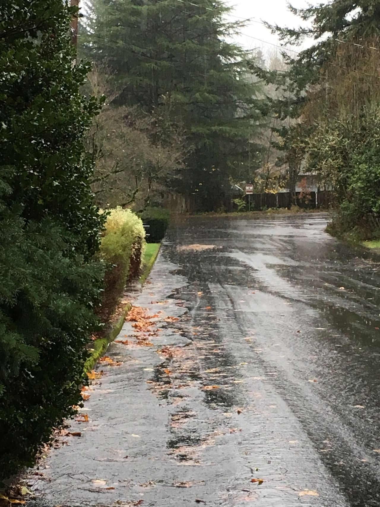 Don't let the rain stop you. Get outside and enjoy ☔️😊 Tree The Way Forward No People Outdoors Road Day Water Rain PNW Pacific Northwest  Opt Outside Liquid Sunshine Trees Rainy Day