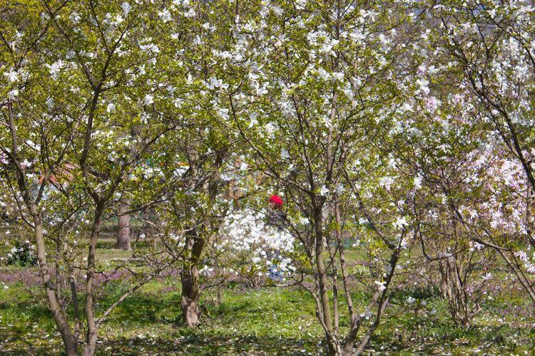 Among the flowers Flowermagic Enjoying Life The Great Outdoors - 2015 EyeEm Awards Thinkingbetter Worldofflowers Wonderland Beautifulday Floweryfriday TheRedHat Nature On Your Doorstep Live For The Story