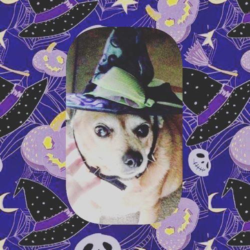 I miss you, bubby. RestinPeaceBubby Ilovemydog Chihuahua Dachshund Chiweenie Mysatan