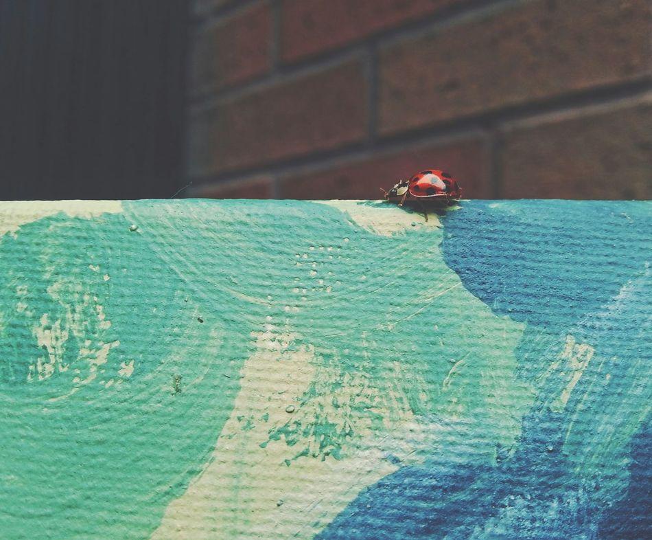 Ladybird on a Canvas ... Ladybug Artist's Studios