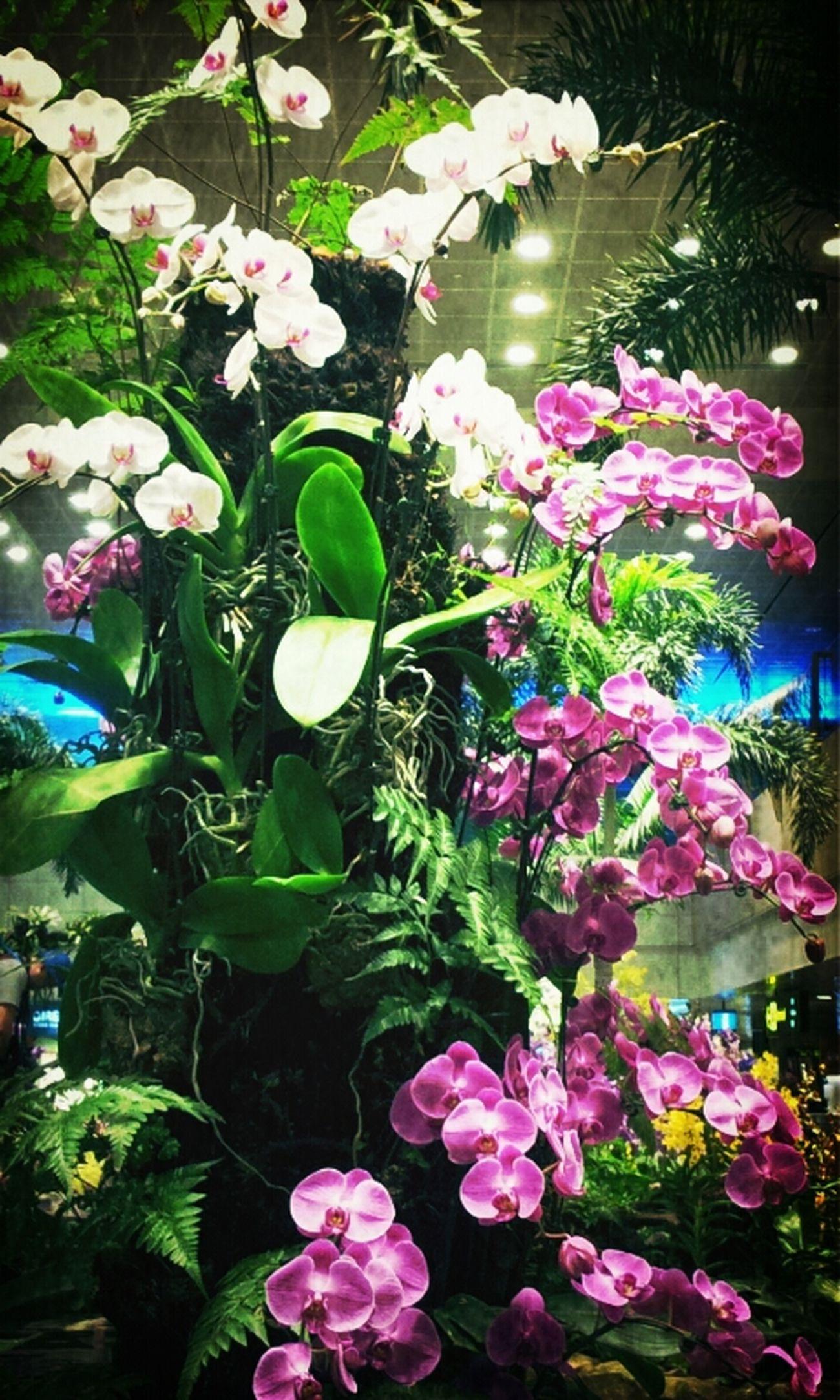 Flowers Nature Orchids #flower#garden#nature#ecuador#santodomingoecuador#eyeEmfollowers#iphoneonly#nofiltrer#macro_garden#pretty#beautiful#followme#sho