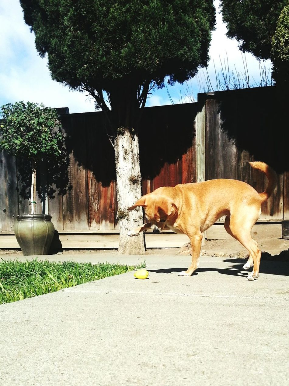 Kloe Smash  Lemon Dog Doglover Fookloe